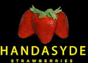 The Handasyde logo of 3 strawberries